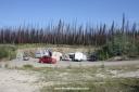 ce qui fait le bonheur de quelques centaines de champignoneurs qui viennent ramasser des morilles au pieds des pins brûlés